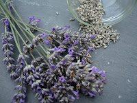 lavendel1 sigrid rossmann pixelio.de  - Der Lavendel - wunderbar duftende Heilpflanze