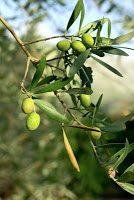 olivenblätter twinlili pixelio.de  - Hausmittel gegen hohen Blutdruck
