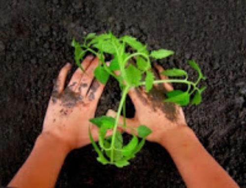 Holler-Kamillen-Salbe gegen raue Hände und Füße