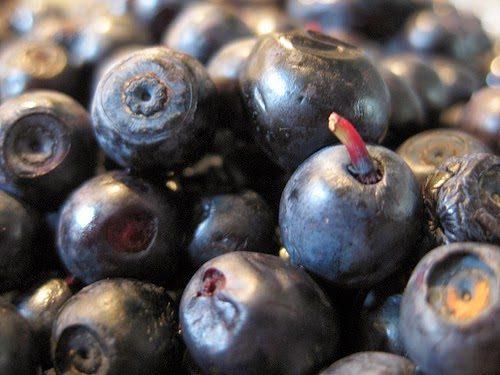blueberry - Mit Blaubeeren gegen das Alter und den Cholesterin