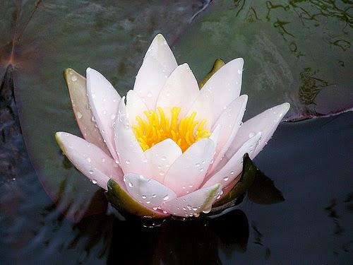 Duschgel - Blüte