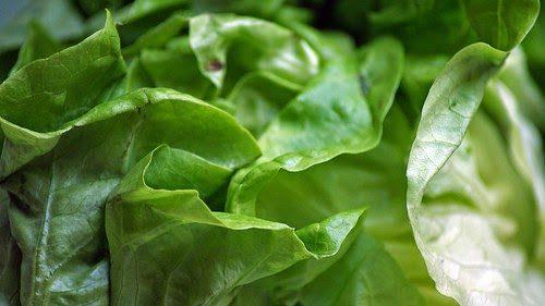 kopfs - Die heilende Wirkung des Kopfsalats