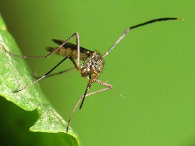 7512088792 db8a7cf8aa z - Kräuter gegen Insektenplage - eine Körperbutter