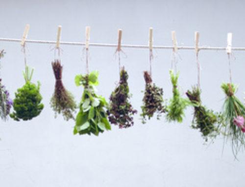 Einstieg in das Handwerk der Kräuterhexe – Kräuter richtig trocknen (Teil 3)