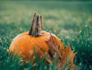 Kürbis – gesund durch den Herbst