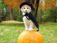 Allerheiligen – Halloween – Samhain
