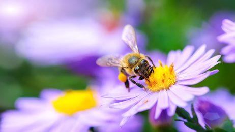 Fotolia 92845326 XS 2 - Insektenstich, was nun?
