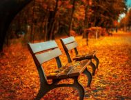 Sich mit Andorn auf den Herbst vorbereiten