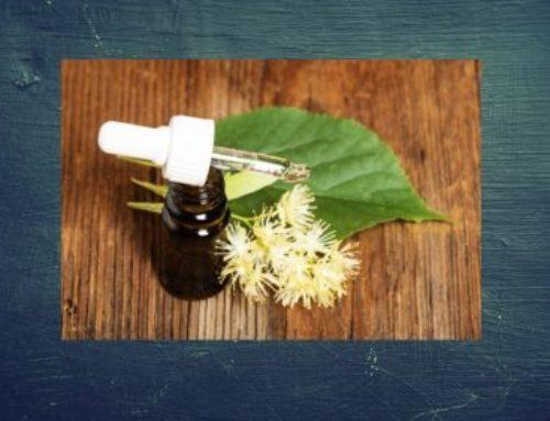Eine Lindenblütentinktur selber machen