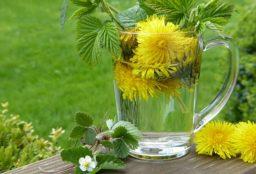 dandelion 2232626 640 256x174 - Kapland-Pelargonie – Heilpflanze gegen Bronchitis und Schnupfen