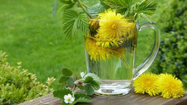 dandelion 2232626 640 e1522061733926 - Kräuter gegen die Frühjahrsmüdigkeit