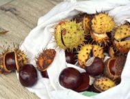 Rosskastanie – Heilbaum vor der Tür