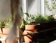 Was tun im März auf Balkon, Terrasse oder im Garten?