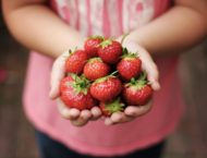 Die Erdbeere eine Frucht der Liebe