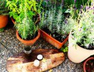 Hand- und Nagelsalbe mit Lavendel und Rosmarin  –  selbstgemacht