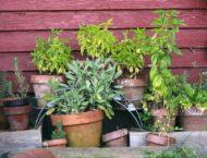 Bio-Dünger und Bio-Pflanzenschutz selbst herstellen