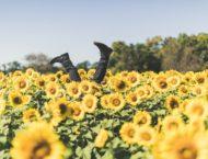 Mit Sonnenblumen heilen