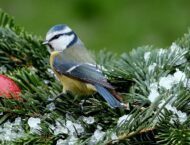 Vögel im Winter füttern