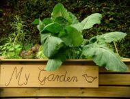 Pflanzen – Kräuter – Gemüse für Anfänger*innen