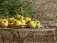 Was tun im Oktober? Gartentipps und Wildkräutersammelkalender